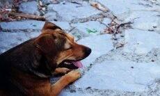 Cão vigia túmulo de seu dono há três anos