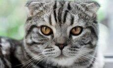 Estudo identifica as 5 personalidades dos gatos e o que elas revelam sobre o caráter dos bichanos