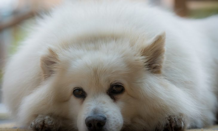 Cães podem ficar deprimidos? Conheça os sinais e saiba o que fazer