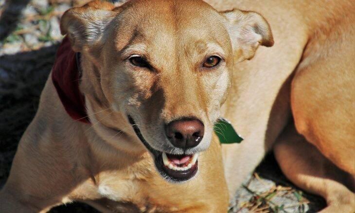 Levantamento revela quais são as 10 raças de cães preferidas pelos brasileiros