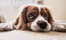 Quer proteger a saúde mental do seu cão? Jamais grite com ele