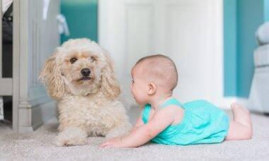 A família vai crescer? Saiba como apresentar o bebê para o seu cão