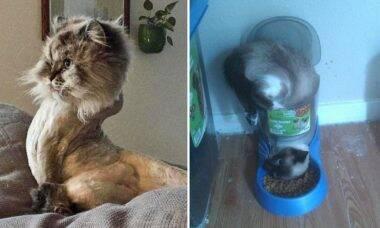 Donos compartilham fotos hilárias de gatos com 'problemas de funcionamento'