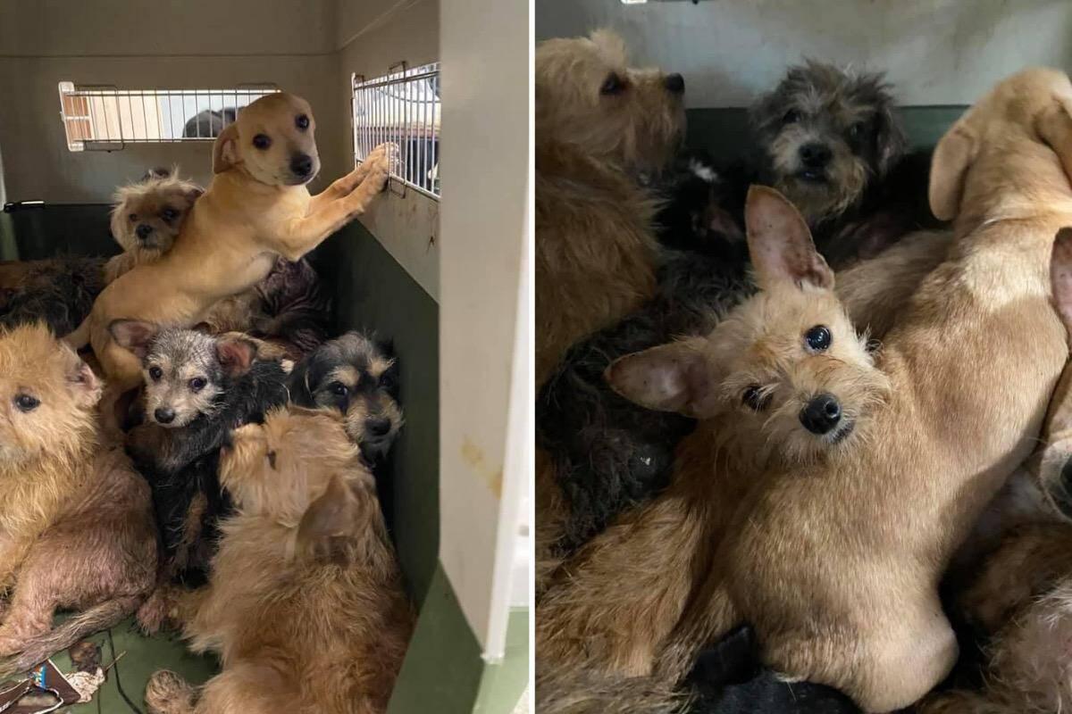 Pelo menos 75 cães e 30 gatos são resgatados da casa de uma mulher morta