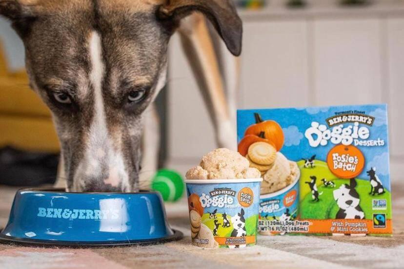 Ben & Jerry's lança linha de sobremesas para cães