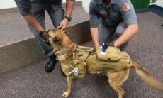 Fatec cria colete inteligente para cães que trabalham em resgates
