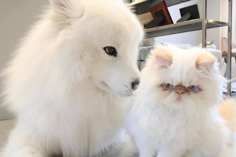 Vídeo: Conheça Casper e Romeo, cão e gato que vivem como irmãos