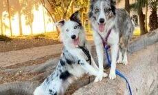 Vídeo: Cães batem recorde mundial do número de truques em um minuto