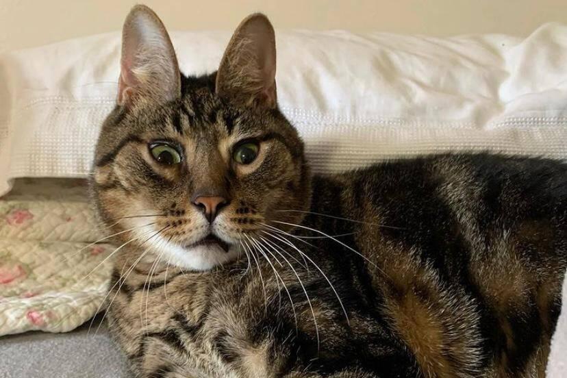 Conheça, Peanut, o gato com deformidade que virou estrela da internet