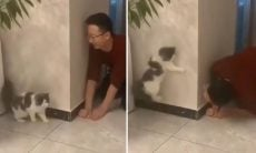 Esse vídeo de gato brincando de esconde-esconde vai alegrar o seu dia