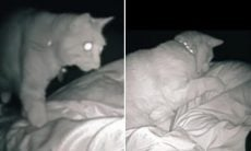 Vídeo: Dona que vivia cansada descobre que seu gato a cutuca a noite toda