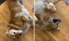Vídeos: Donos mostram seus cães eufóricos no TikTok e quebram a internet