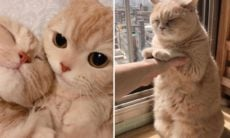 Conta no Twitter junta razões para ter um gato em casa; conheça 10 delas
