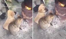 Esse vídeo de um cão e um gato compartilhando calor vai aquecer seu coração
