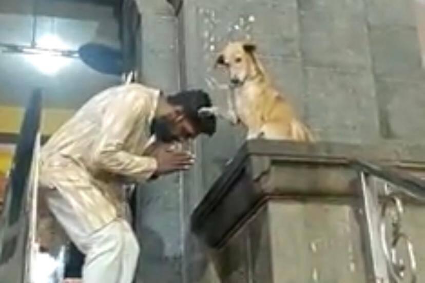 Vídeo: Cão 'abençoa' devotos na saída de templo e viraliza na internet