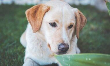 20 raças de cães ideais para conviver com a família