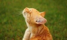 Confira formas naturais de manter o seu gato livre das pulgas