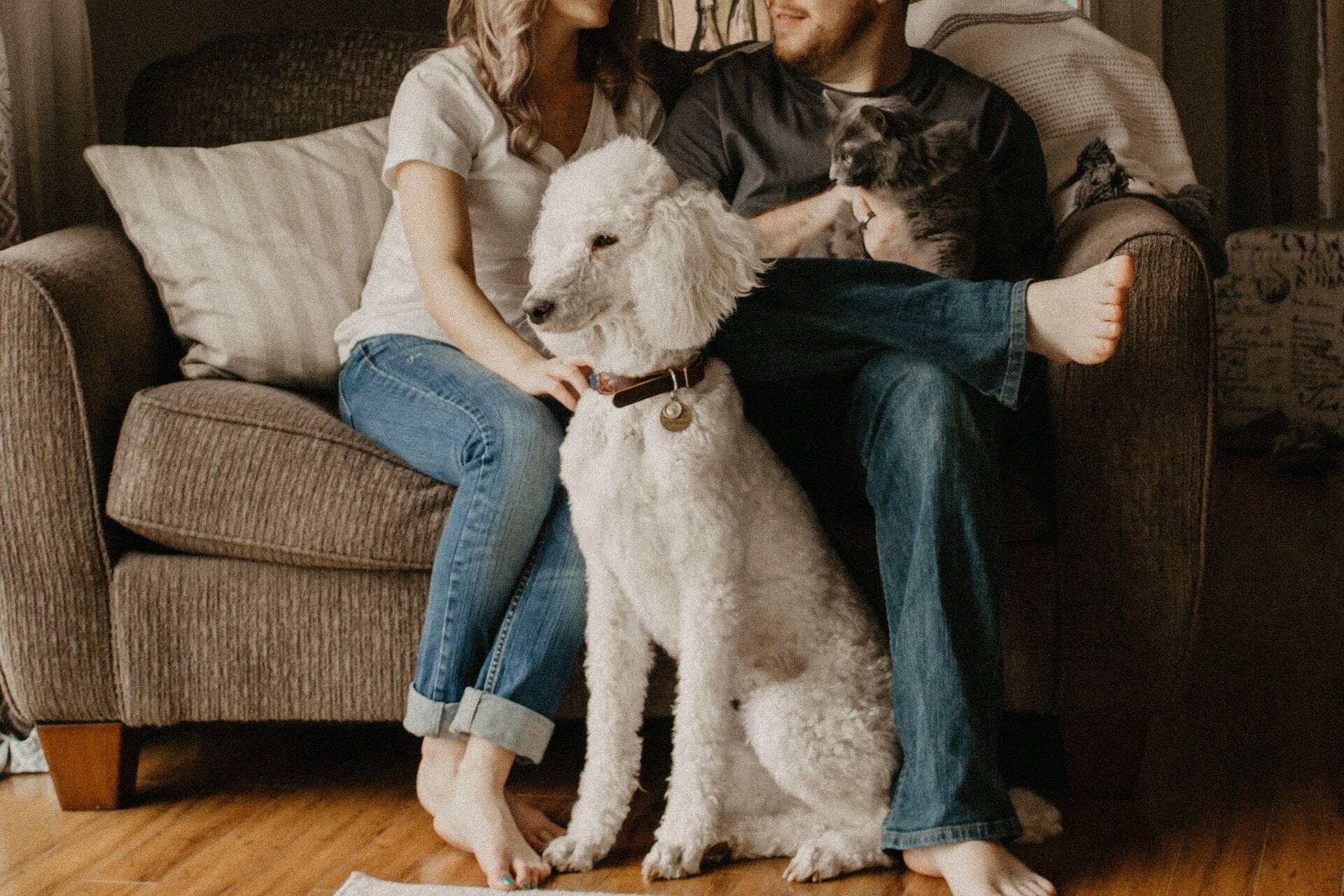 Saiba quais raças de cães ajudam você a conseguir um novo relacionamento