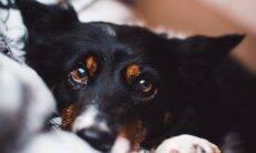 Fotos fascinantes revelam a visão que cães e gatos têm do mundo ao redor