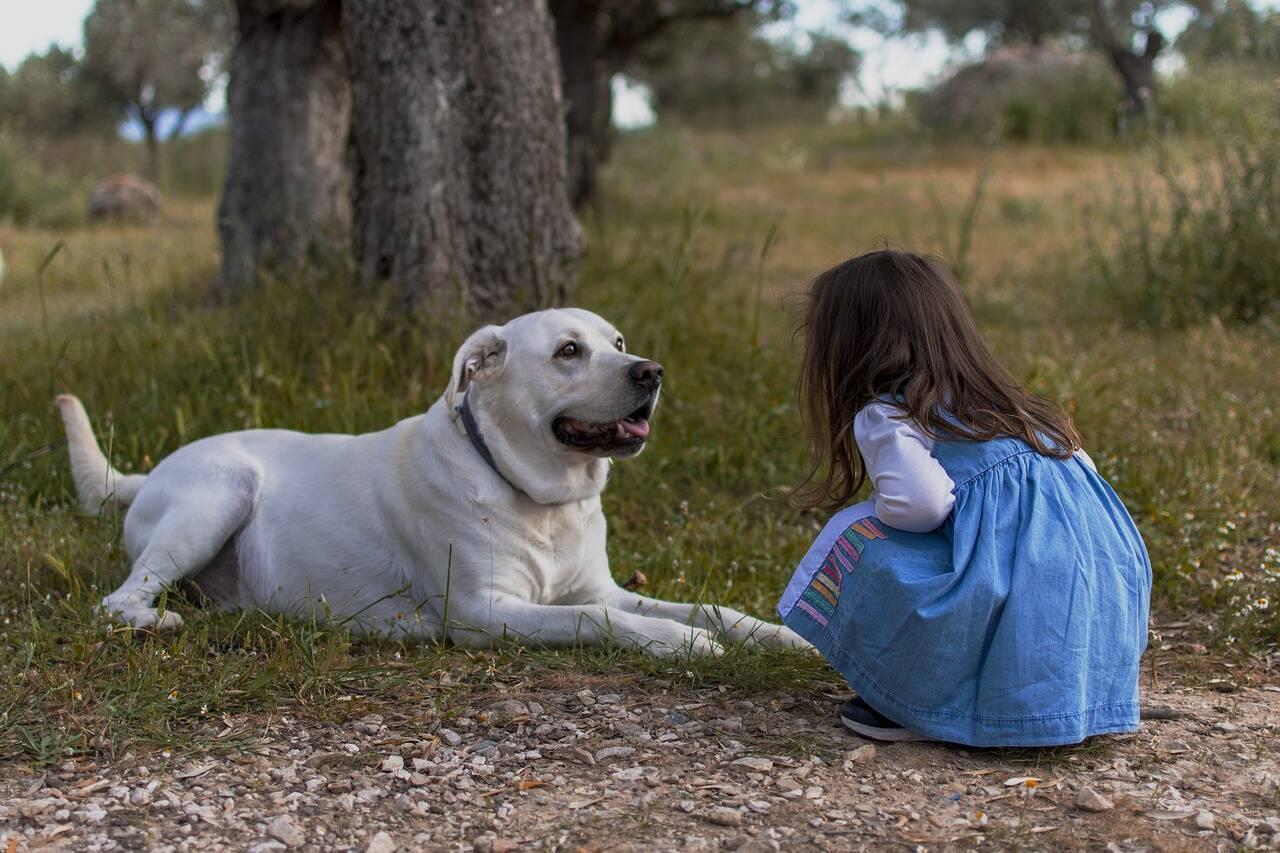 Cães aprendem muito com crianças, indica estudo