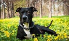 Cão retorna para casa após uma aventura de 12 anos