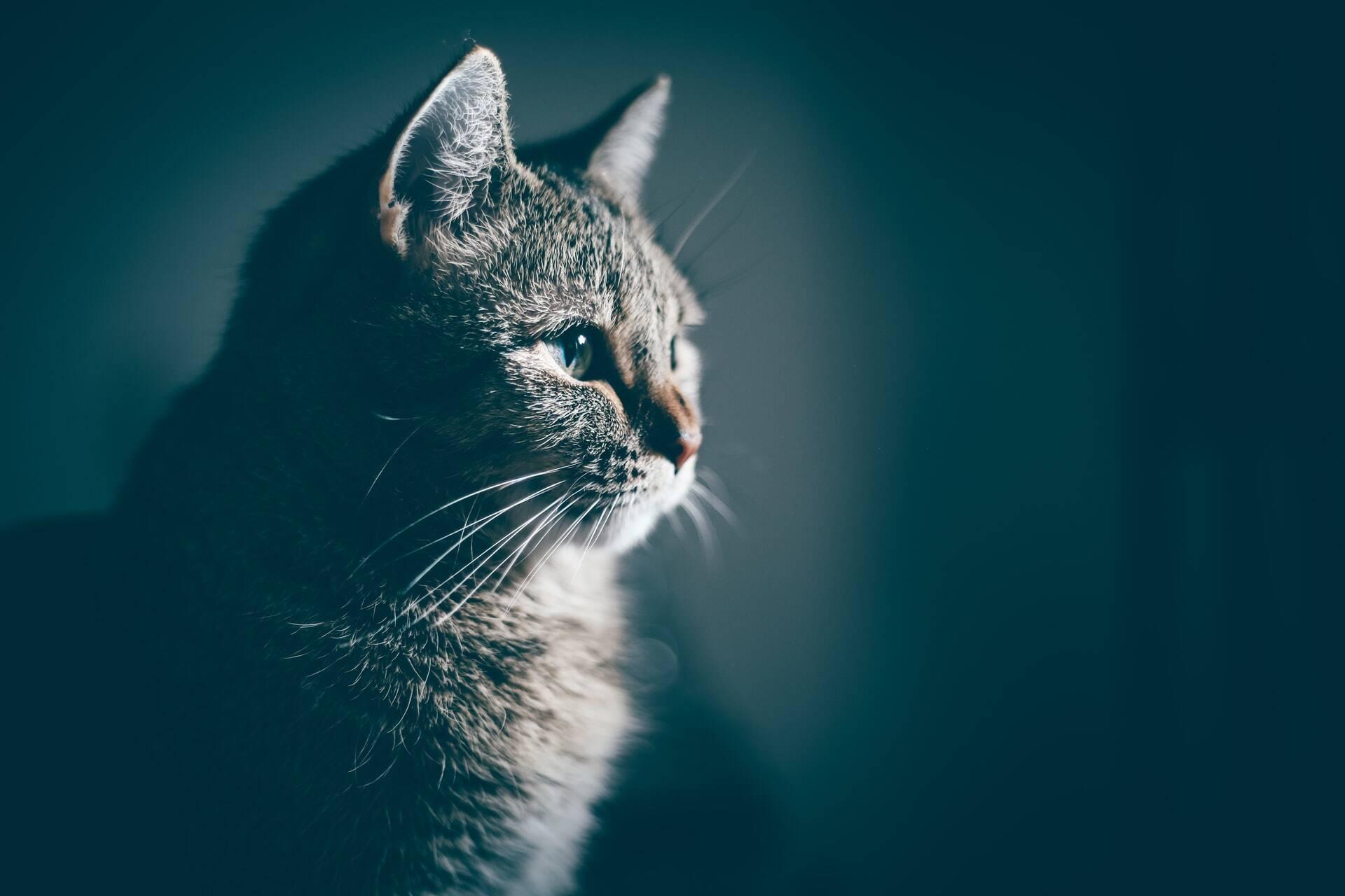 Cientistas encontram link entre parasita dos gatos e câncer no cérebro de humanos