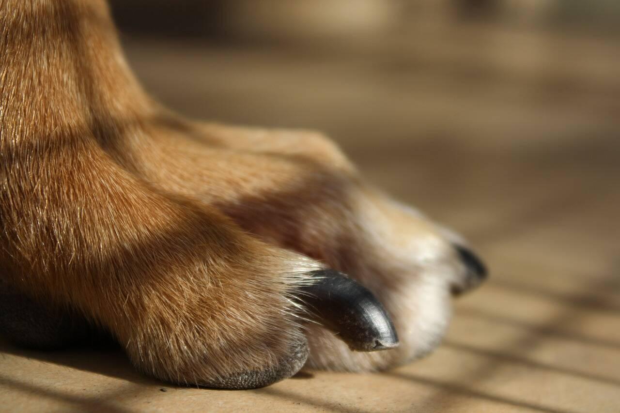 Tudo o que você precisa saber sobre cuidados com as unhas do seu cão