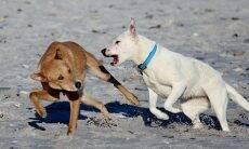 Aprenda a controlar cães que mordem pessoas e outros animais