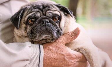 Confira as 10 melhores raças de cães para conviver com idosos