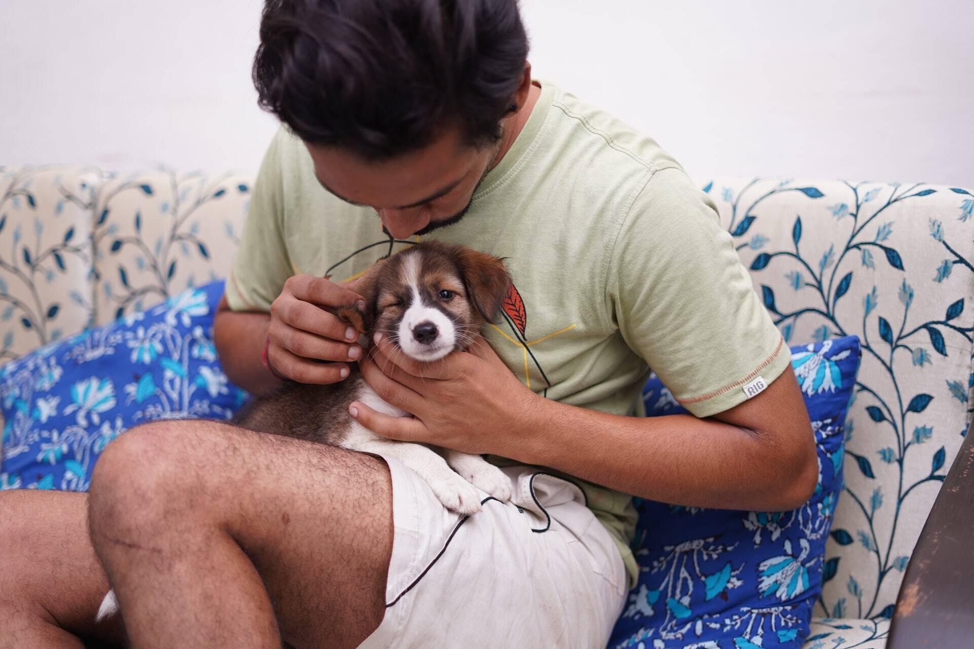 10 resoluções de Ano Novo que todo dono de pet deve fazer