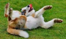 Olha, mãe! Cães brincam mais quando humanos estão olhando, diz estudo