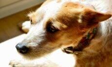Seu cão está ansioso? Aprenda a diagnosticar e saiba o que fazer