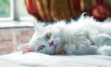 5 mitos e verdades a respeito dos gatos