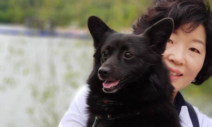 Cães e gatos farão teste de Covid na Coreia do Sul