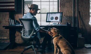 7 maneiras com as quais os cães melhoram as suas chances na carreira