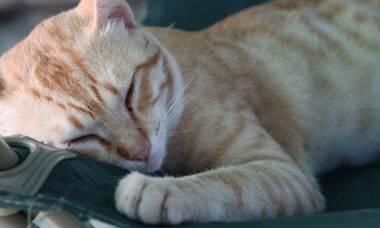 Saiba por que gatos gostam tanto de dormir no pé dos donos