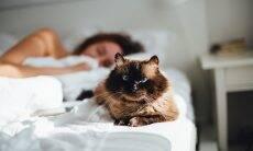 Seu gato não deixa você dormir? Saiba como dar um jeito nisso