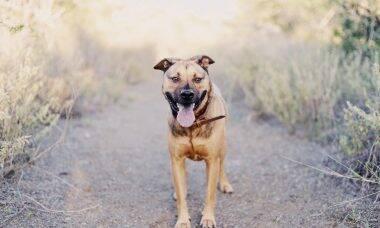 5 razões para adotar um cão adulto e 5 dicas para adaptá-lo ao novo ambiente