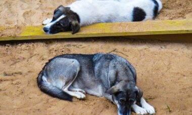 Famintos, cães praticam canibalismo em abrigo mantido pelo governo das Ilhas Maurício
