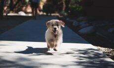 Seu cão adora fugir? Descubra a razão e saiba como controlá-lo