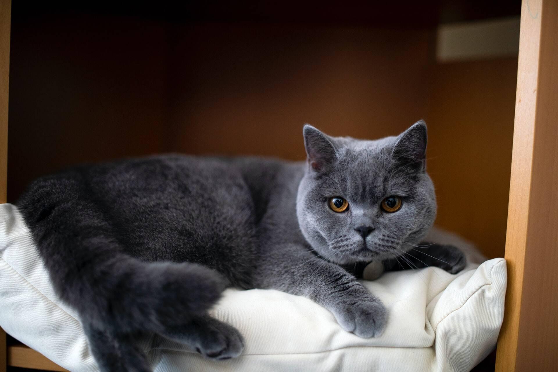 6 ameaças caseiras que podem matar o seu gato