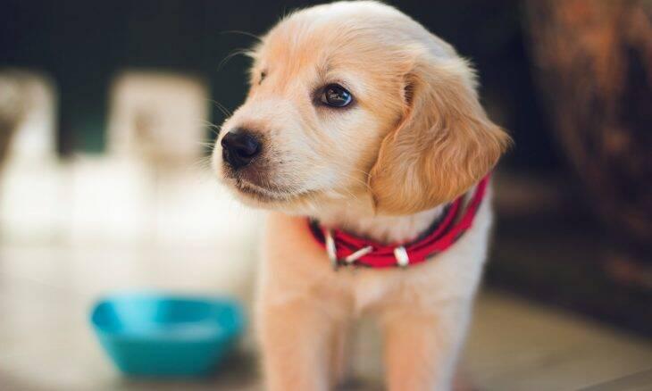 Conheça os perigos escondidos em casa e que podem até matar seu cão