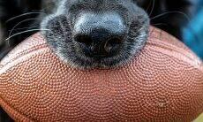 Quem vai ganhar o Super Bowl no domingo? Veja a previsão dos cães