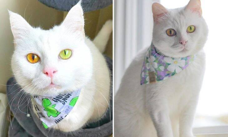 Conheça Ivory, a gata de olhos fluorescentes e que mudam de cor