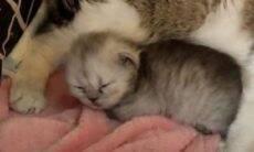 Cientistas chineses conseguem gerar o segundo gato clonado do mundo