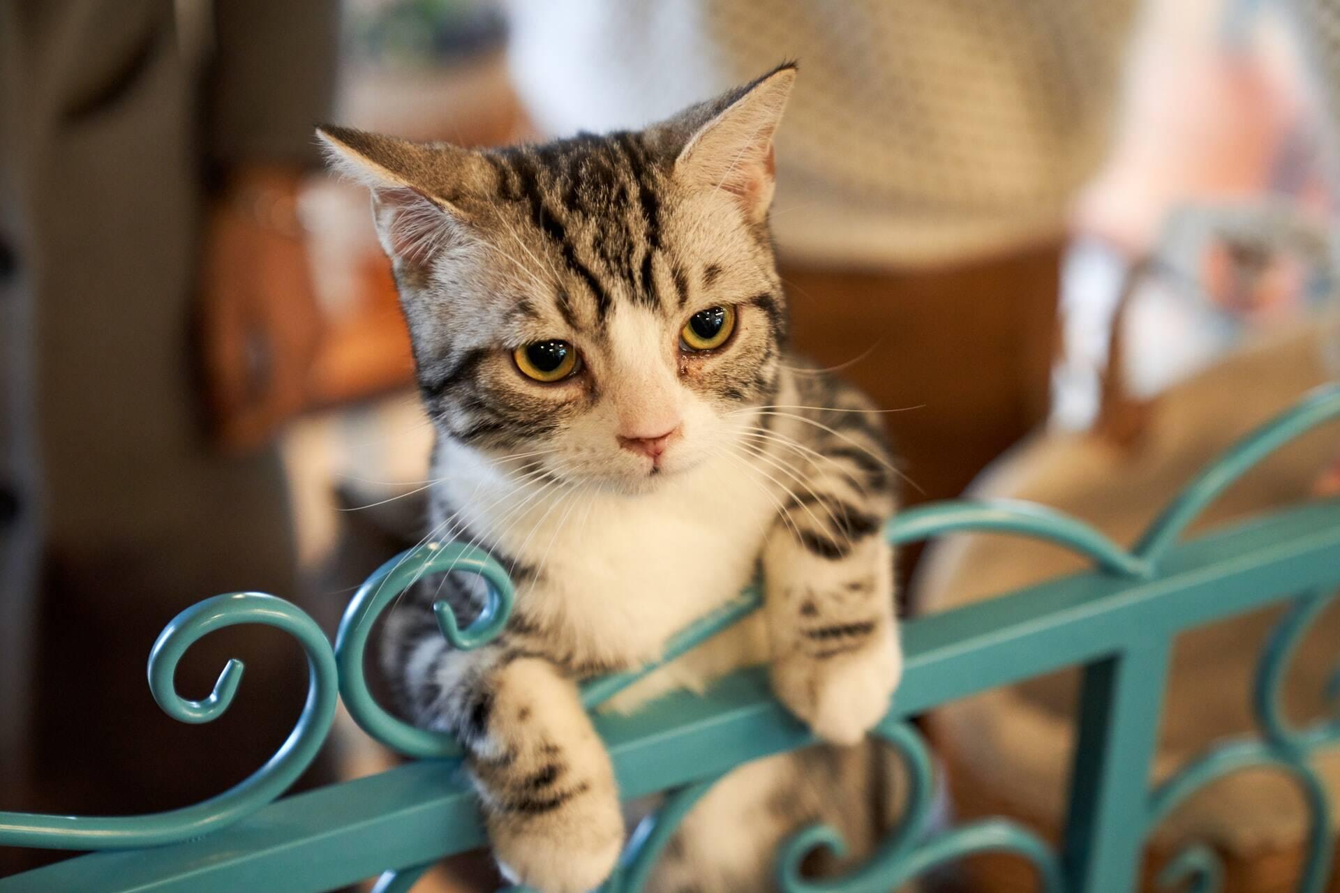 Se um estranho tratar você mal, seu gato não vai mover uma palha, revela estudo
