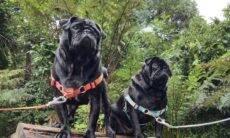 Empresa lança coleção de guias e caminhas para cães e gatos estilosos