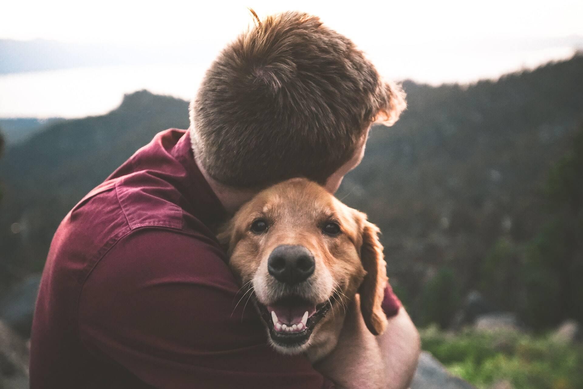 Quer melhorar o comportamento de um cão? Trate o dono, sugere estudo