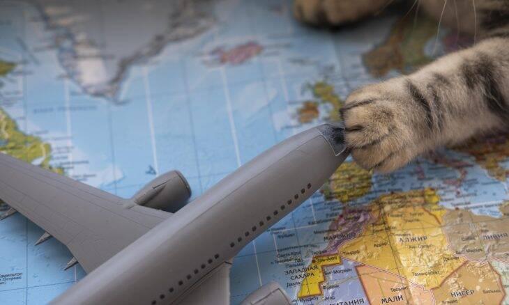 Gol desenvolve produto para melhorar as viagens aéreas dos pets