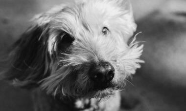 3 cães morrem após serem atacados por enxame de abelhas